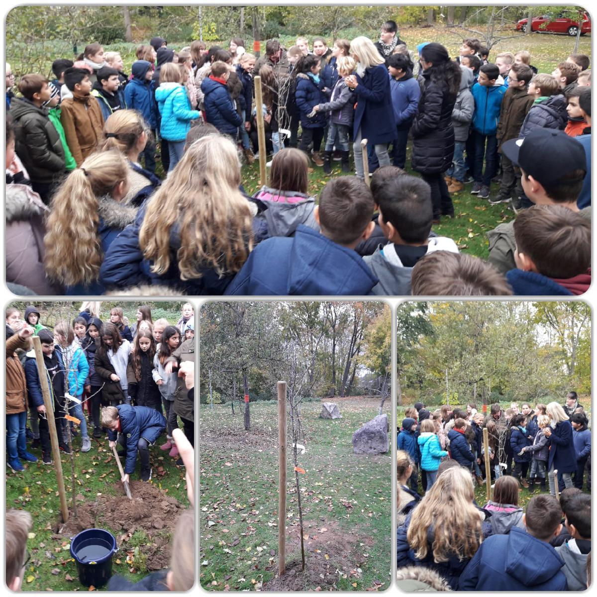 Pflanzung des Zuccalmaglio Baumes 2018