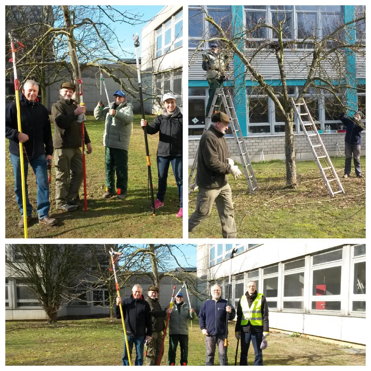 Workshop zum Thema Obstbaumschnitt erfolgreich absolviert